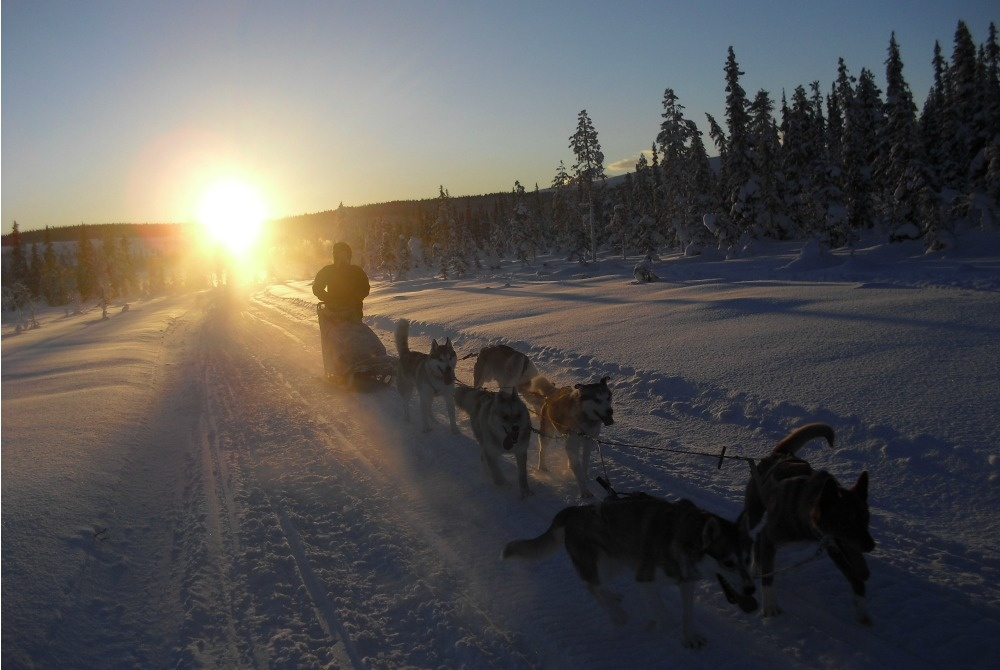 Avvakko Adventure Hundeschlittentour Gällivare