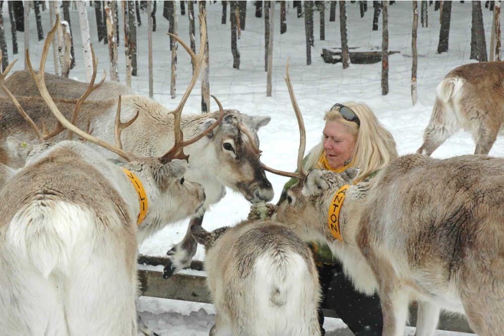 Posio Lapland-Ylitalo Reindeer Farm