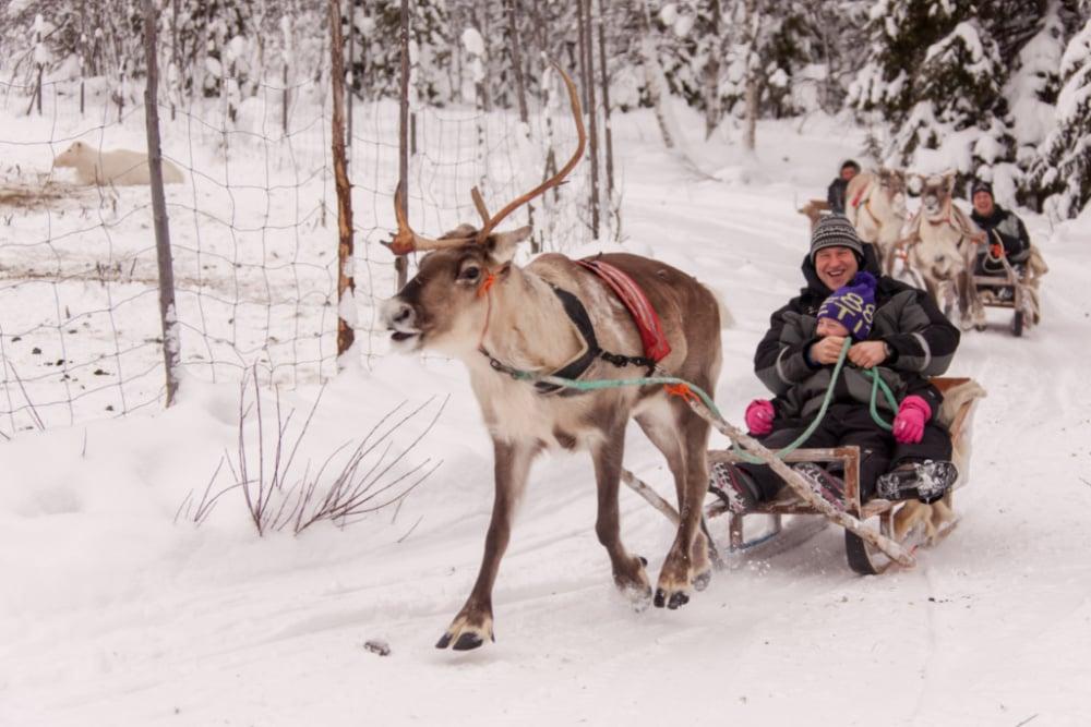 Syote-Iso-Syote-Winter-Wochenprogramm-Rentier-Safari