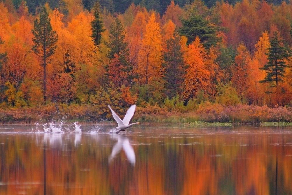 Herbstpaket Ruska Levitunturi