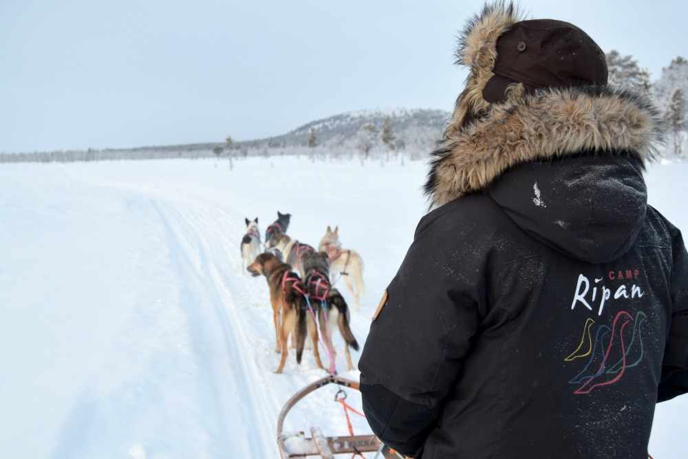 Camp_Ripan_Acitivity_Winter_dogsled_driver1_HuskyHome_Photo_LinneaLundkvist_1000