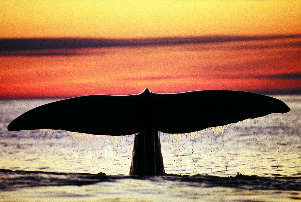 ITB Aussteller Whalesafari Andenes