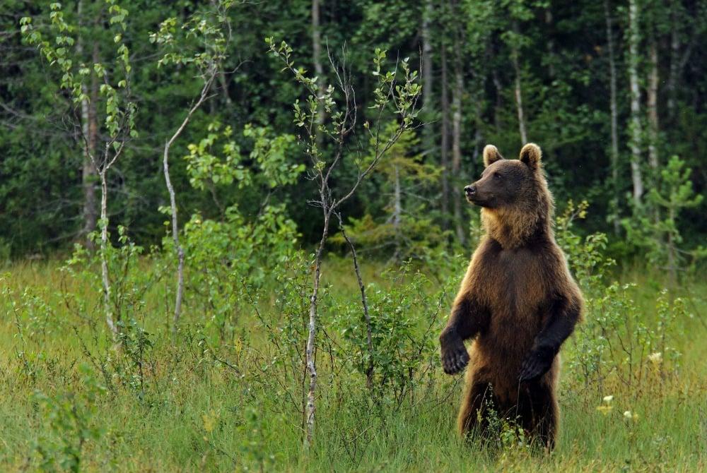 Karhu Kuusamo Bär