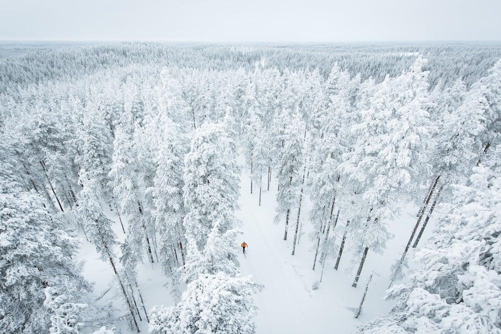 Rokua Winter