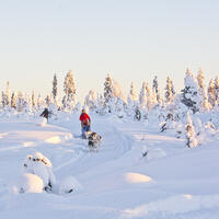 Heart of Lapland Landing Page
