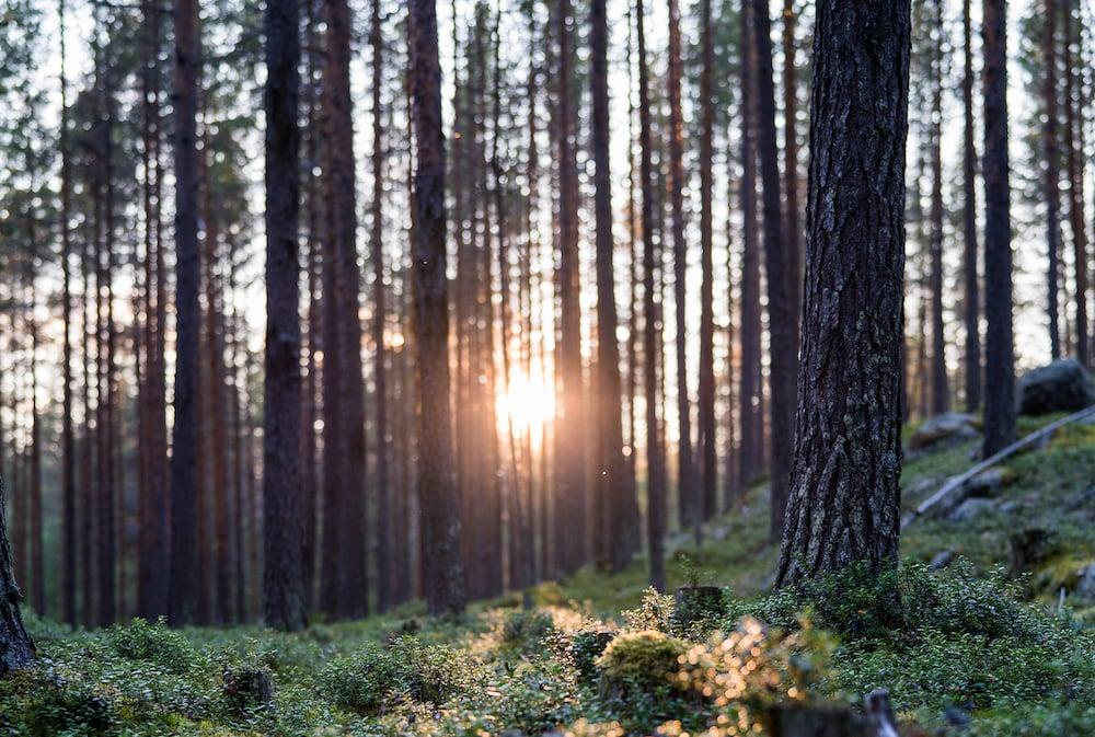 Schwedisch Lappland Header