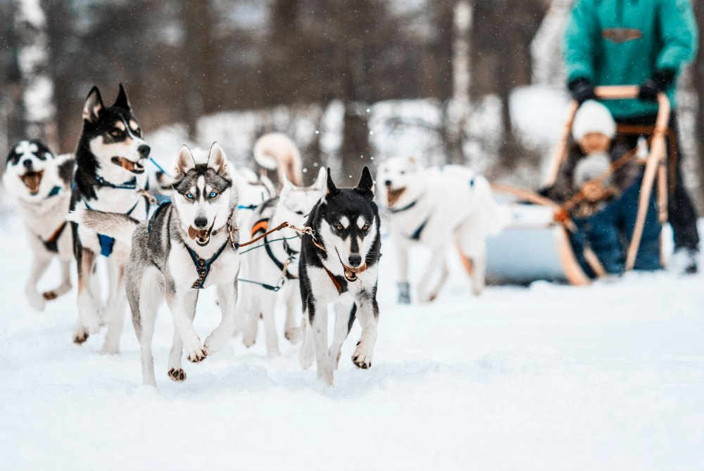 Hundeschlittenfahrt in Espoo