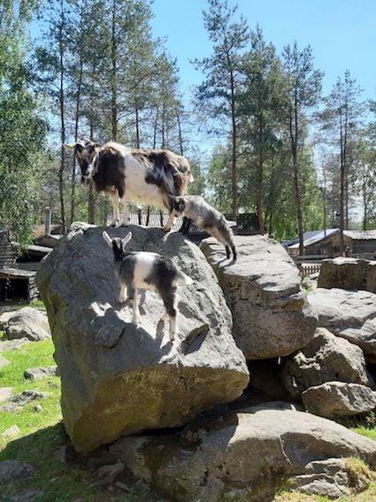 Kokkola - Tierpark Toivonen u. Bauernmuseum