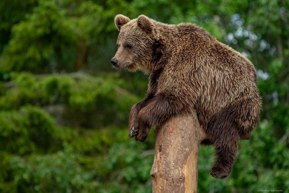 Seinäjoki - Ähtäri Zoo - Bärenfrühstück