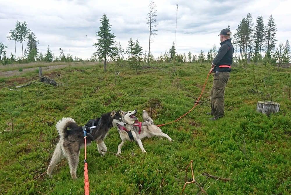 Wanderung mit einem Husky