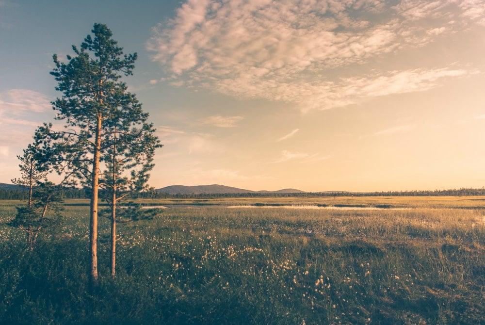 Sommerliche Landschaft in Levi