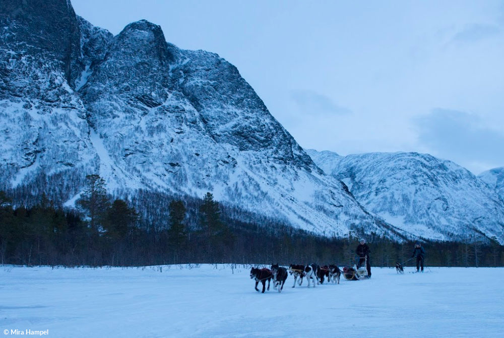 Hundeschlittenfahrt in der Region Lyngenfjord
