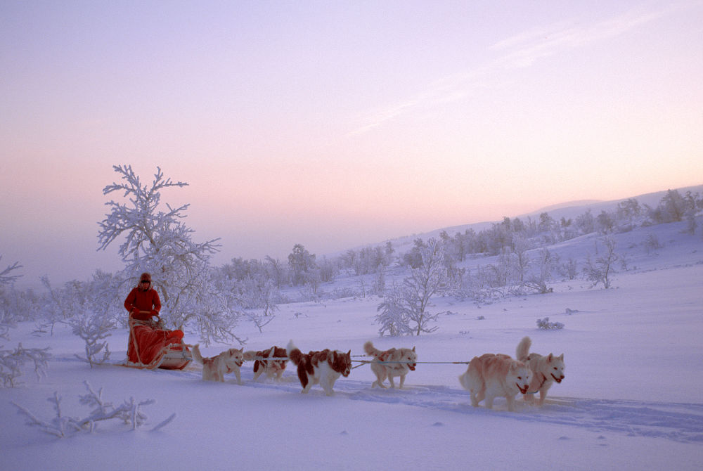 Travel like a local-husky sled-copyright-Bjorn-Klauer-www.nordnorge.com