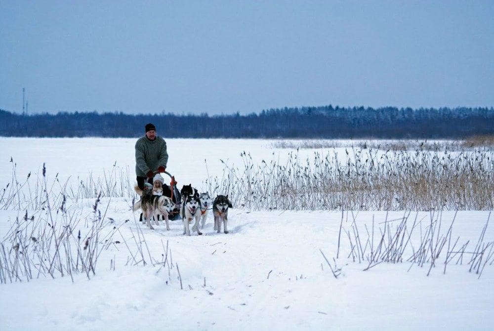 Hundeschlittenfahrt in der Region Oulu