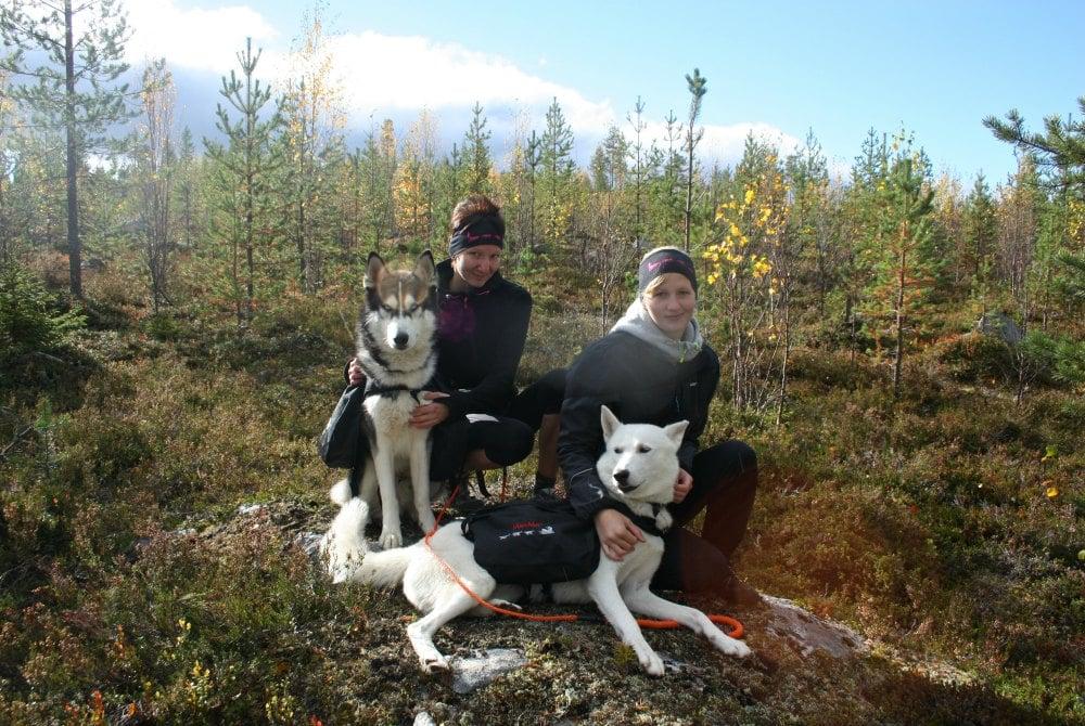 Wanderung mit Huskys in Iso Syöte