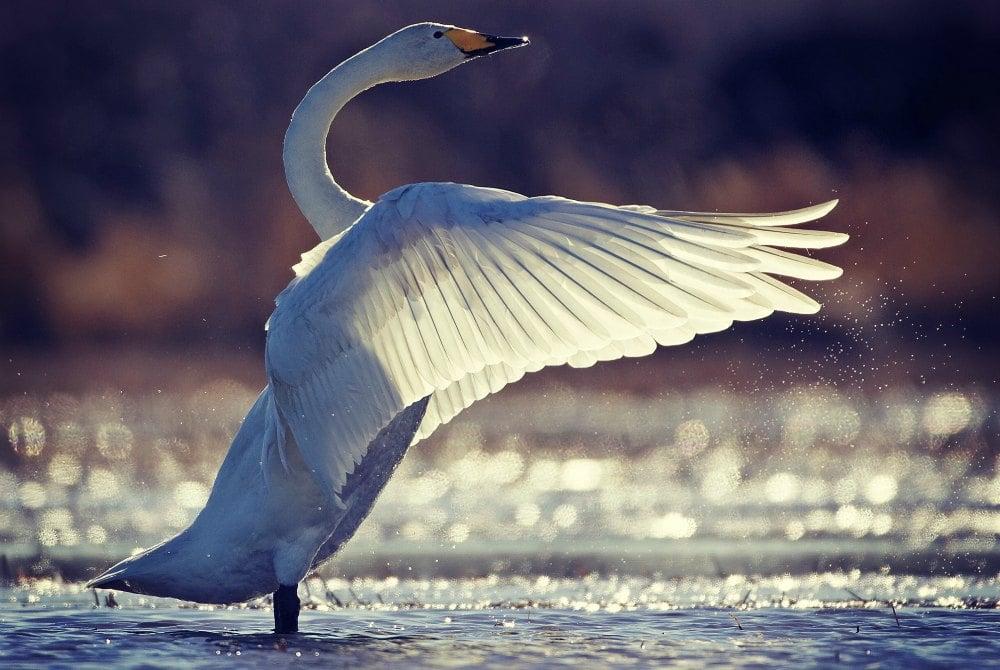 Reiche Vogelwelt in Liminka