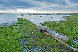 Sumpfgebiet in Liminka © Ville Suorsa