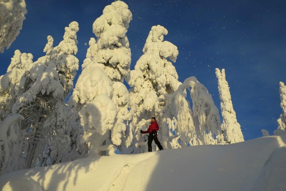 Syöte Nationalpark - Schneelandschaft
