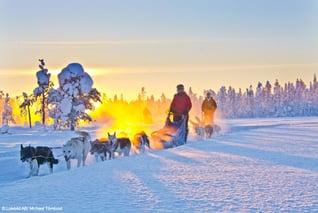 Explore-the-North_Husky-Stille-einer-Winterwoche2-copyright-Michael-Törnkvist_1000