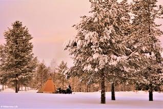 Wilderness-Life-Motorschlitten-Wochenende-Paket-Arvidsjaur_1000-2