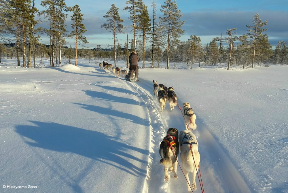 Ausgiebige Hundeschlittentour in Arjeplog