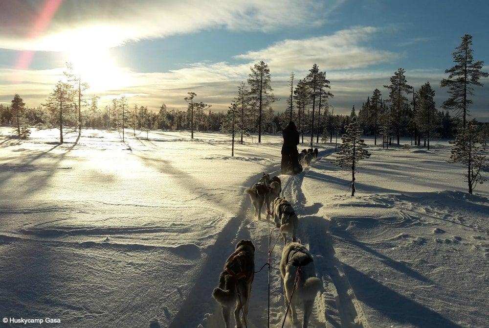 Huskycamp Gasa-Hundeschlittentour in Arjeplog2