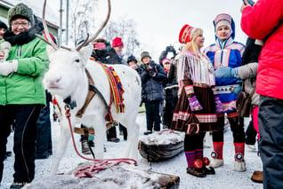 Jokkmokk Wintermarkt-samische Kultur-Rentier-copyright Carl-Johan Utsi