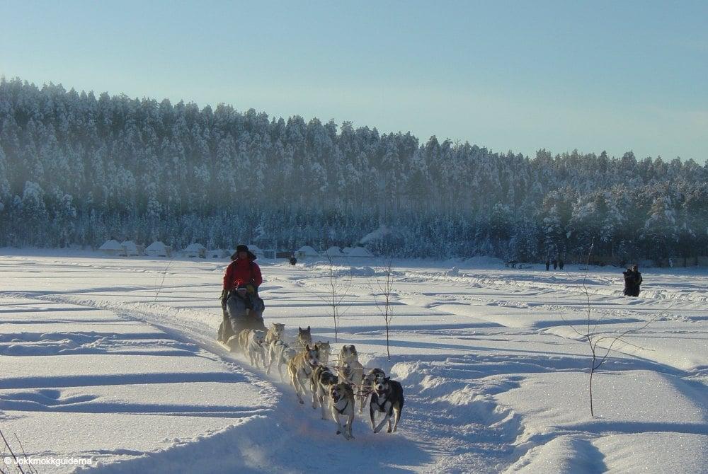 Hundeschlittentour durch die Wälder Jokkmokks