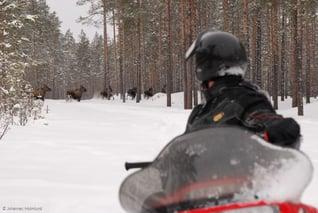 Burträsk Camping-Snowmobile-Johannes Holmlund