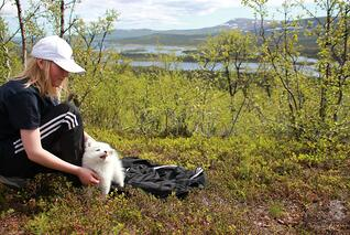 Camp Ripan-Wanderung mit Huskys
