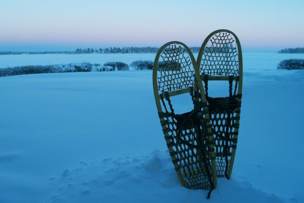 Wildtier-Tracking in Piteå