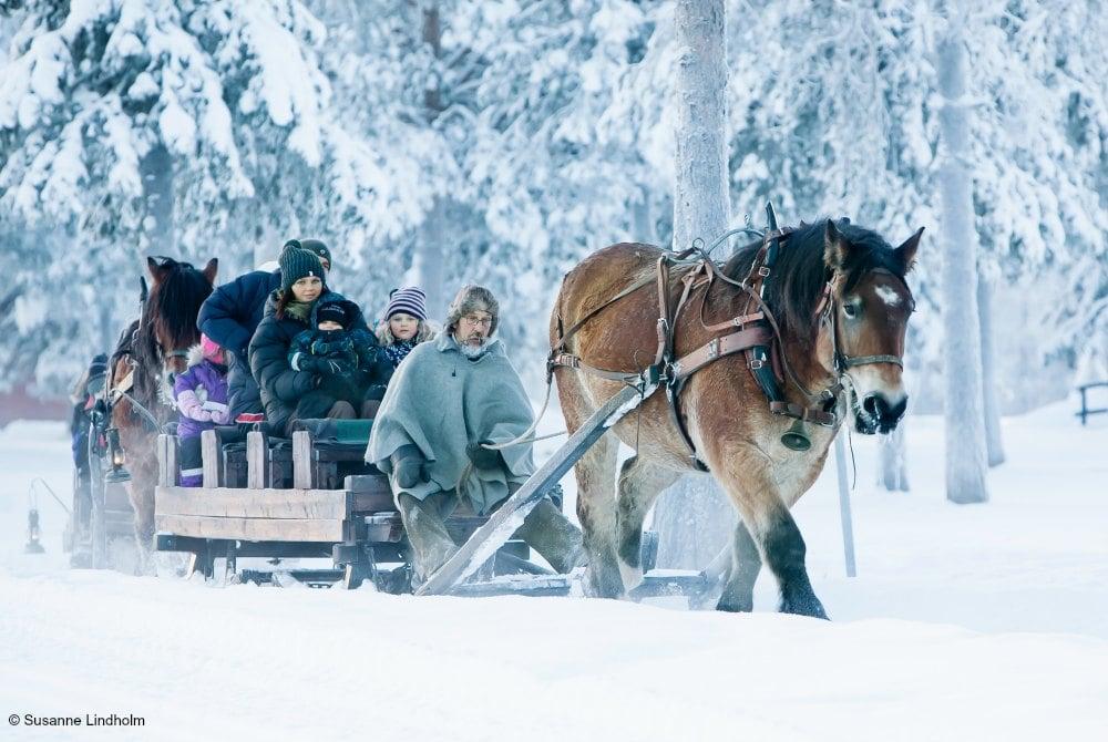 Pferdeschlittenfahrt in Gällivare