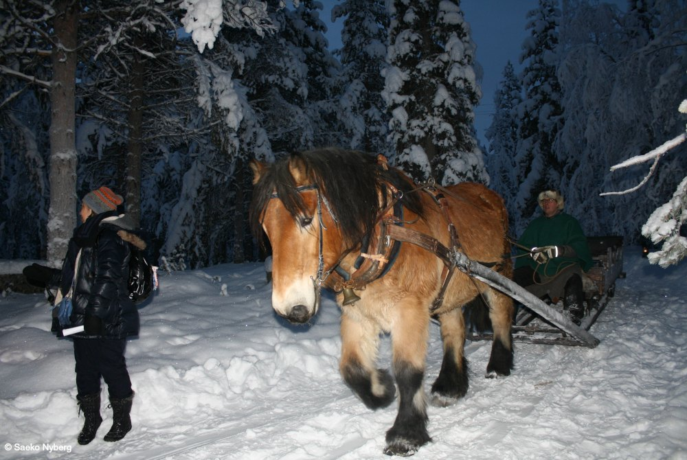 Magic of Lapland-Nordlicht-Schlittenfahrt by Saeko Nyberg