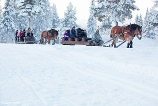 Magic of Lapland-Pferdeschlittenfart-Susanne Lindholm5