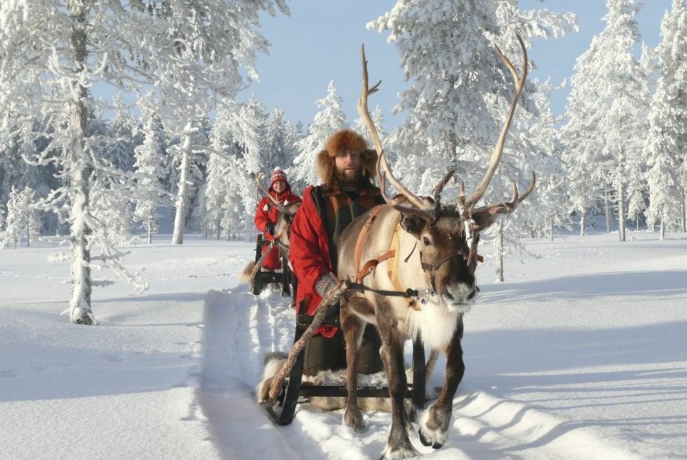 Rentierschlittenfahrt durch die verschneite Winterlandschaft