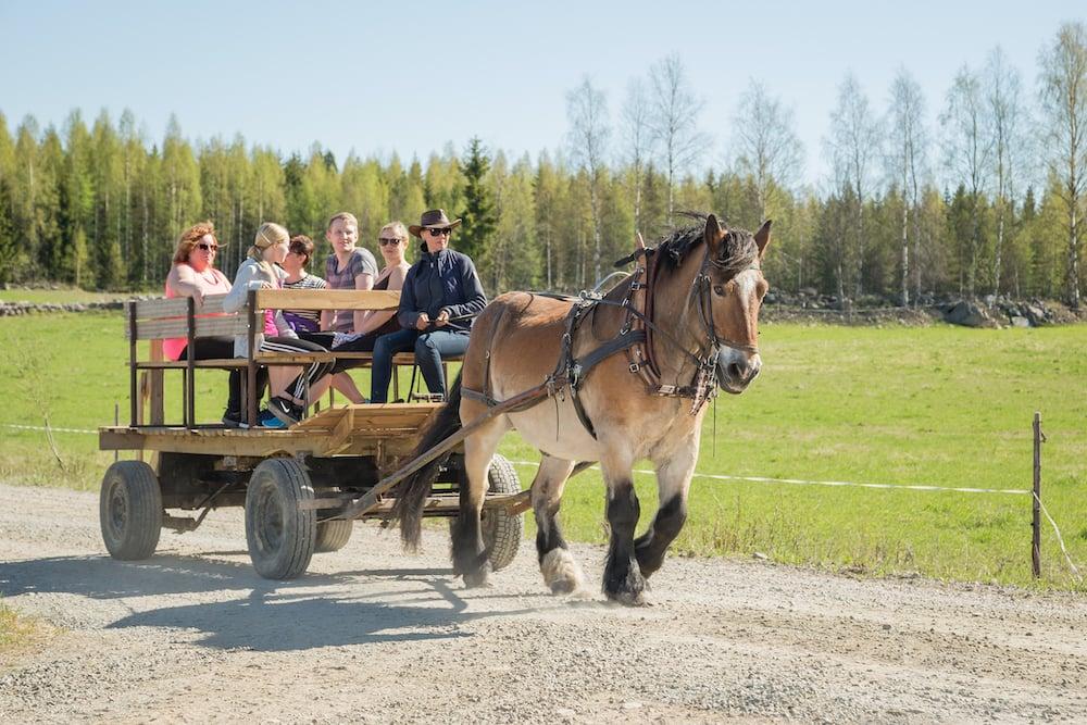Tampere Luomajärvi Horse Kutschfahrt