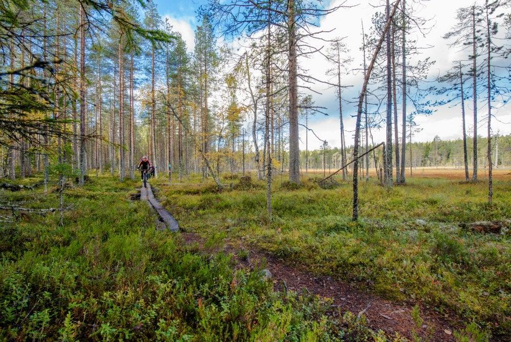 Mountainbiken in Ukkohallas Wäldern