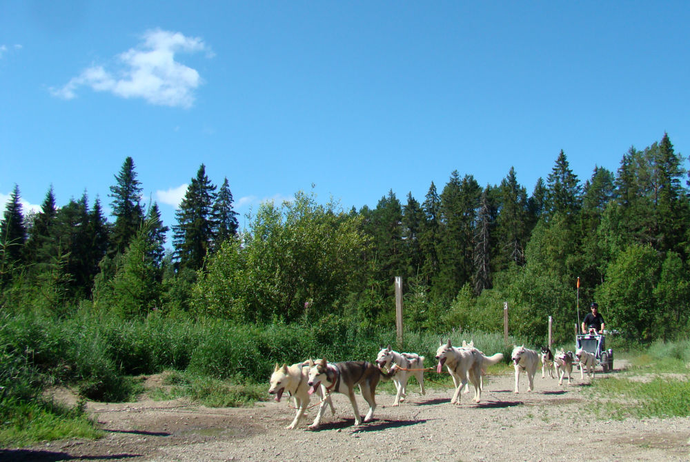 Vuokatti - Husky Farm im Sommer