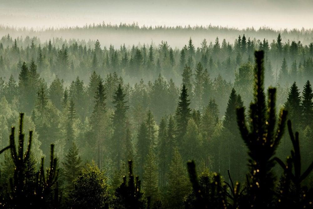Herbstliche Waldlandschaft in Vuokatti