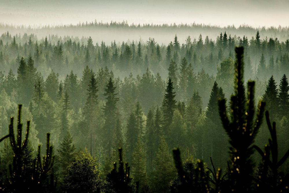 Autumnal forest landscape in Vuokatti