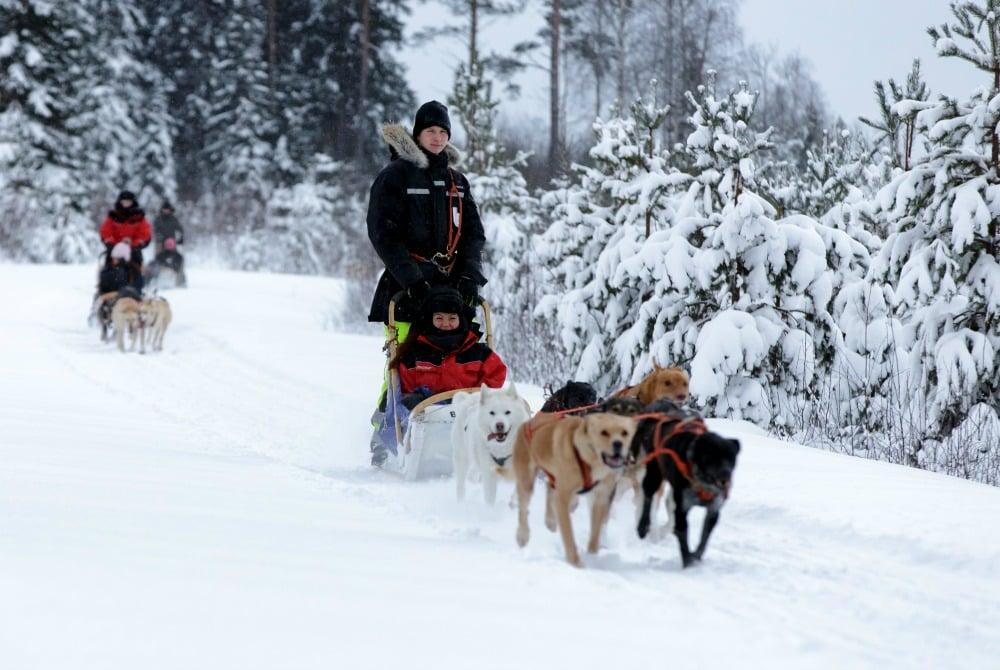 Freundliche Huskies führen Sie durch die Winterlandschaft von Voukatti.