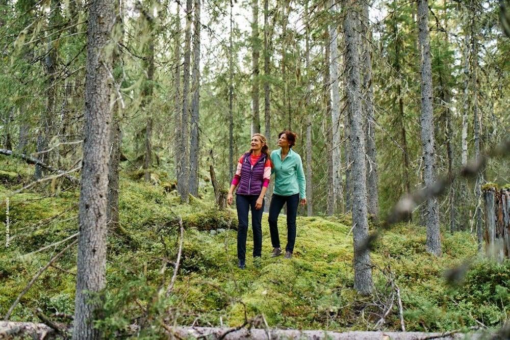 hotelkalevala_forest