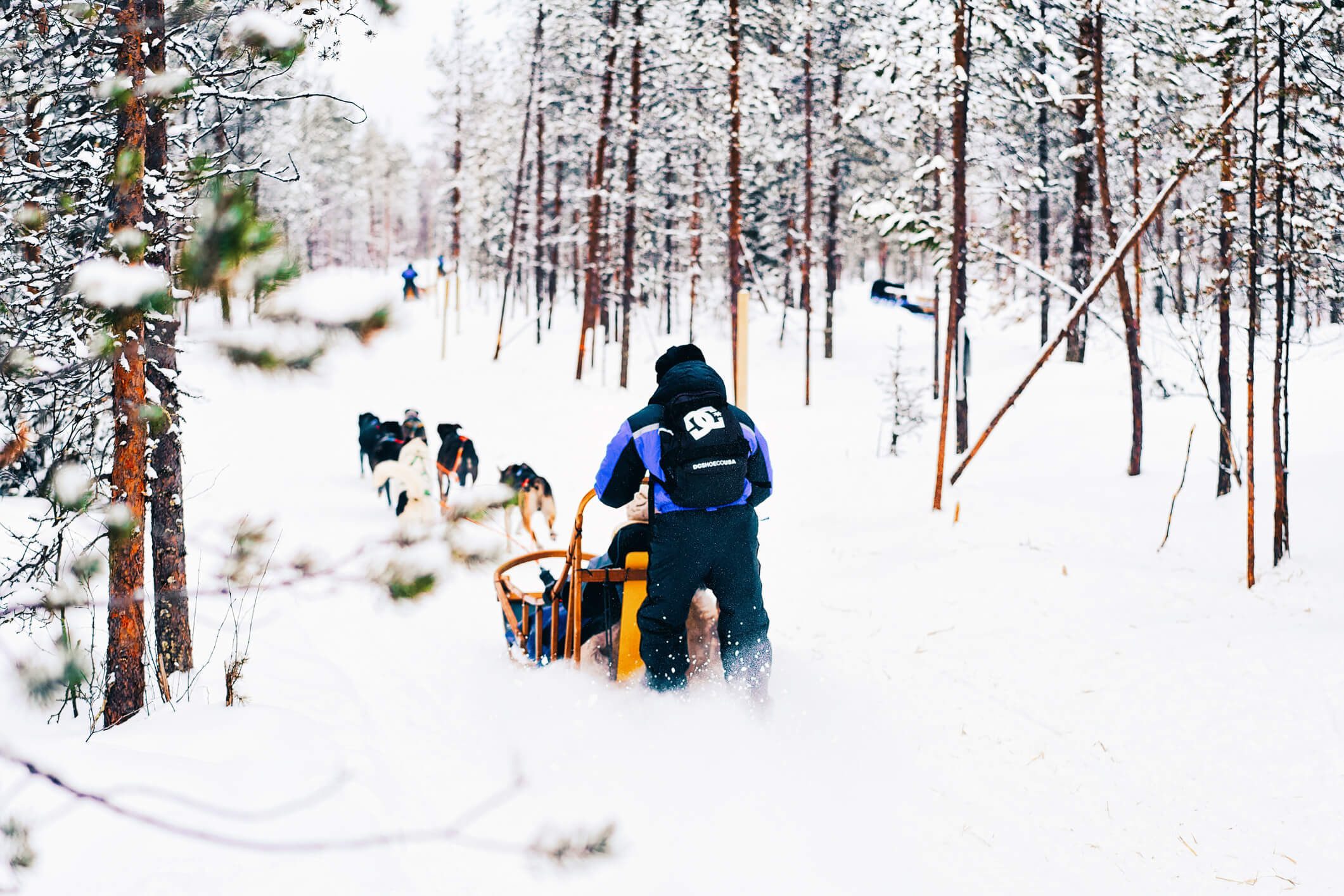People-in-Husky-dog-sled-in-Finland-in-Lapland-1058941340_2125x1416