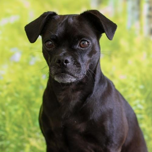 Nala - Office Dog in Training, NordicMarketing