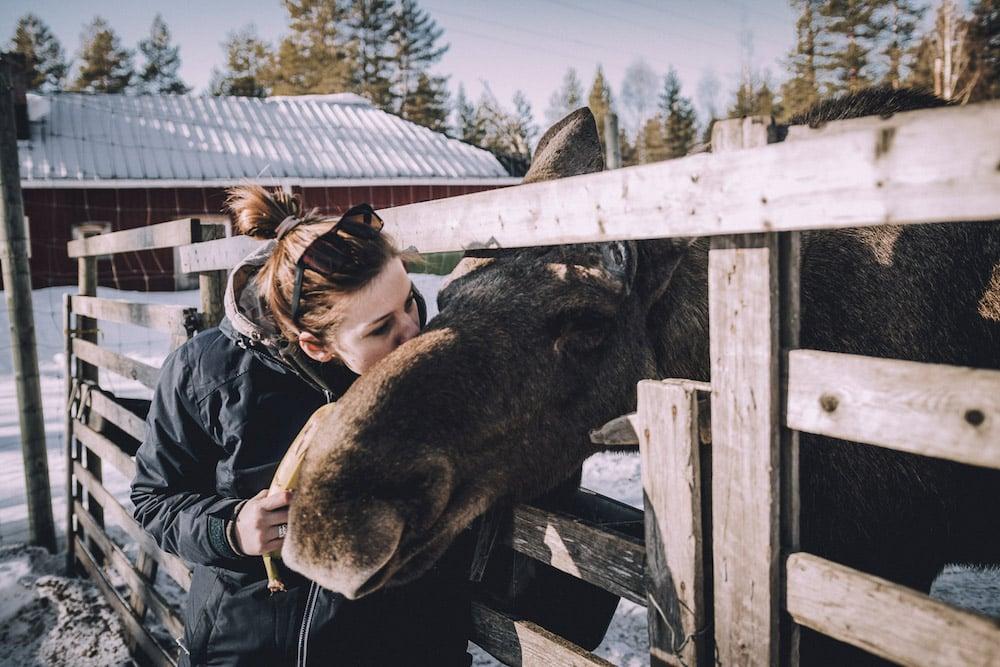 Norrsken Lodge_Schneespur Kompakt_Moose Park