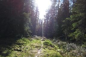 Fredrik Broman_imagebank.sweden.se_forest_glade