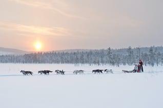 SL_anna_öhlund-dog_sledding_adventure Jokkmokk
