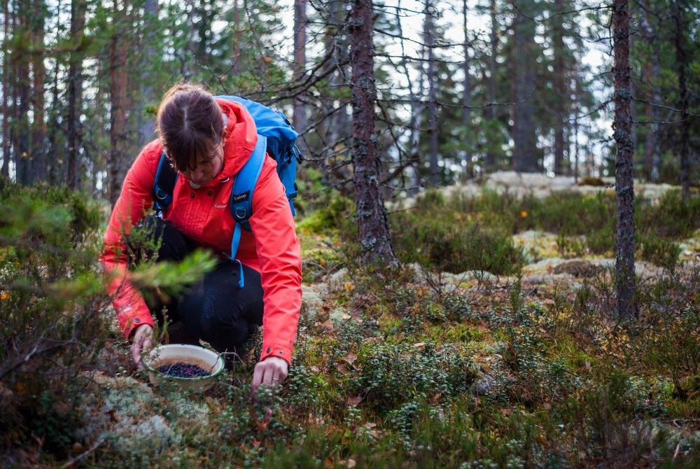 Espoo-Beeren-sammeln-Nuuksio-Nationalpark