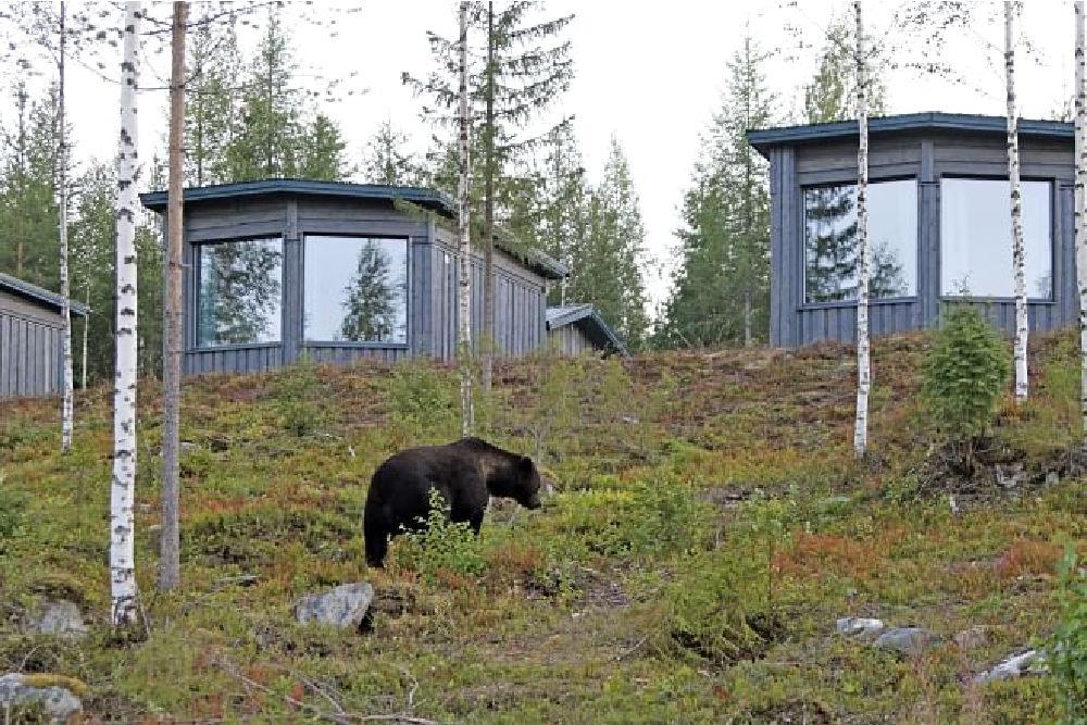 Bear Centre-Hides
