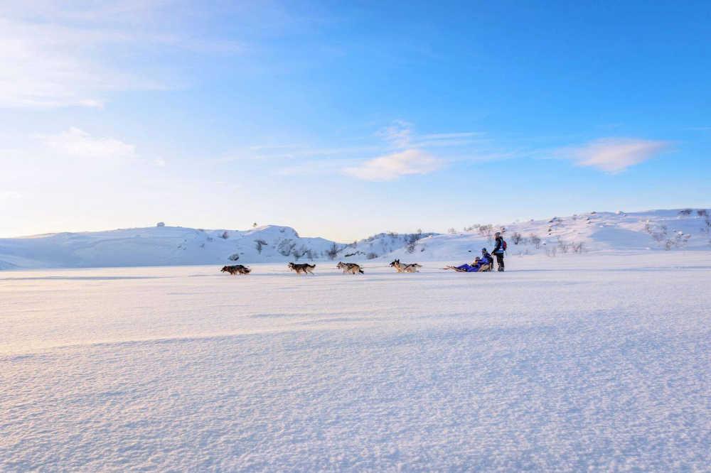 Visit Kirkenes-husysafari-source www.facebook.com_visitkirkenes